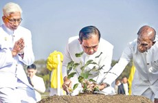 Thai PM plants sapling of sacred Sri Maha Bodhi Tree