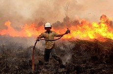 Many forest fire hotspots discovered in Indonesia
