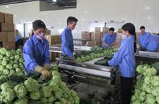 VN shows great potential for processed vegetable, fruit exports