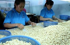 Vietnamese cashew sector seeks to increase export value