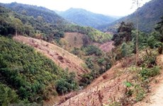 Third stage of Vietnam Forests, Deltas Programme launched