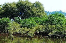 Green Climate Fund helps Quang Nam adapt to climate change