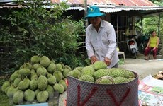 High potential for fruit, vegetable exports to China