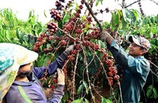 Vietnam targets higher coffee quality, value