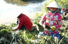 Hau Giang: Nearly 70 million USD needed for agro sector