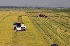 Vietnamese rice industry needs value chains