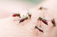 UK-funded dengue forecasting system introduced in Vietnam