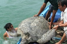 Con Dao National Park – nesting haven for sea turtles
