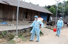 20 localities hit by African swine fever after Lai Chau outbreak