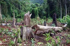 PM approves project to restore forests in Central Highlands
