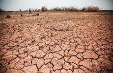 Central Highlands province struggles with prolonged drought