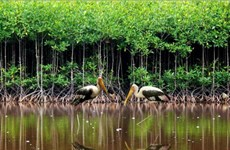 Workshop discusses protected area governance in Vietnam