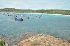 Phu Yen releases breeding shrimp, fish into the sea