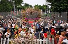Japanese cherry blossom festival extended for one day