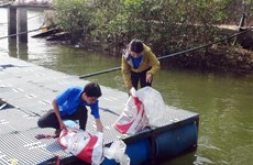 Ba Ria-Vung Tau releases breeding shrimp, fish into nature
