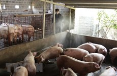 Cambodia reports first African swine fever outbreak