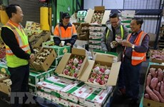 Fruit and veg exports fall 9.3 percent in Q1