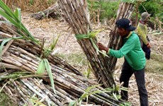 Sugar industry could be sweeter with restructuring