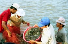 Kien Giang applies advanced technologies in large-scale shrimp farming