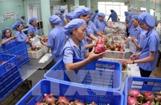 Vietnamese farm produce must be proactive to enter European market: experts