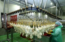 Poultry sector works hard to meet rising demand