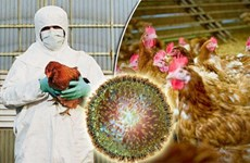 Cambodia reports first outbreak of H5N6 bird flu