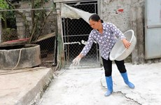 Hanoi city still struggles with African swine fever