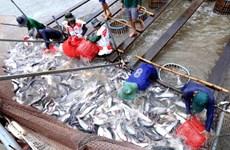 US raises anti-dumping tariffs on Vietnamese tra fish