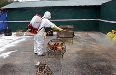 A/H5N6 avian flu outbreak reported in Lang Son