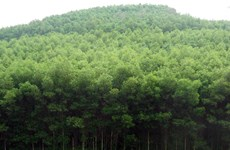 Germany funds forest biodiversity project in Thua Thien-Hue