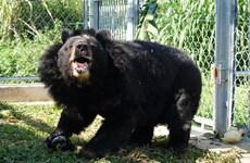 Bear conservation centre in Ninh Binh saves bile bears