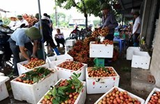 Hai Duong aims to harvest 40,000 tonnes of litchi in 2019