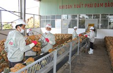 Vietnamese firms seek to adapt to official exports to China
