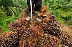Thailand works to distribute palm oil overstock