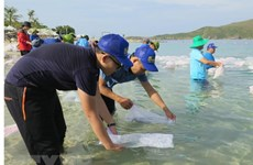 Nha Trang releases fries to regenerate aquatic resources