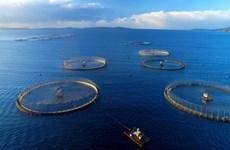 Vietnam eyes sustainable mariculture development