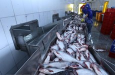 Tra fish shipments to US, China fall