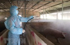 Localities apply drastic measures against African Swine Fever