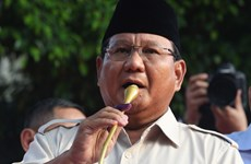 Defeated Indonesian candidates to challenge election results in court
