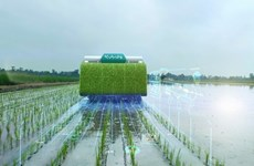 Thailand: Campaign launched to reduce greenhouse gas emissions from rice farming