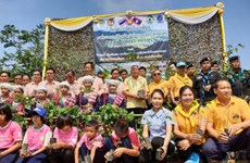 Thailand-Laos forest planting activity held