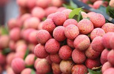 Thanh Ha litchi festival kicks off in Hai Duong province