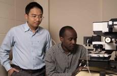 Vietnamese-led research team unlock ultra-thin 2D materials' potential