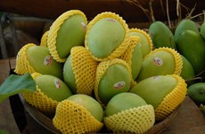 Domestic mango exporters share experience