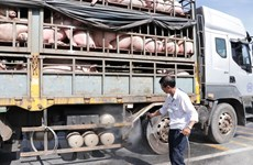 African swine fever continues to spread