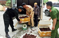 Deputy PM asks for investigation on mass sale of red-claw crawfish