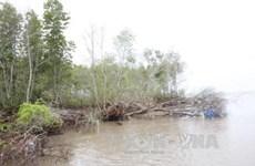 Ca Mau: sea dyke fortification remains a work in progress
