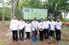 Thai Forest Department, Indian Embassy plant trees commemorating Gandhi