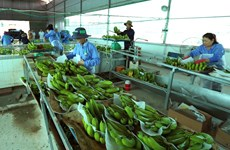 Vietnam's agricultural products facing barriers to enter Chinese market