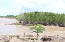 Bac Lieu struggles to protect coastal forests